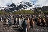 King-penguin-colony-4,-Gold Harbour,-South-Georgia-Island