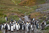 King-penguins-&-waterfall-2,-Grytviken,-South-Georgia-Island