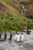 King-penguins-&-waterfall-1,-Grytviken,-South-Georgia-Island