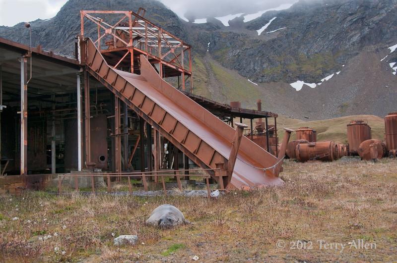 Flensing-ramp,-Grytviken,-South-Georgia-Island