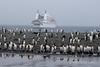 Le-Diamant-&-penguin s,Salisbury-Plain,-South-Georgia-Island