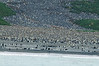 King-penguin-colony-1,-Salisbury-Plain,-South-Georgia-Island