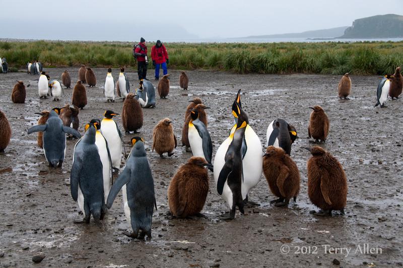 Photographers-&-penguins-5,-Salisbury-Plain,-South-Georgia-Island
