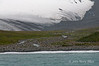 Glacier-&-king-penguins,Salisbury-Plain,-South-Georgia-Island