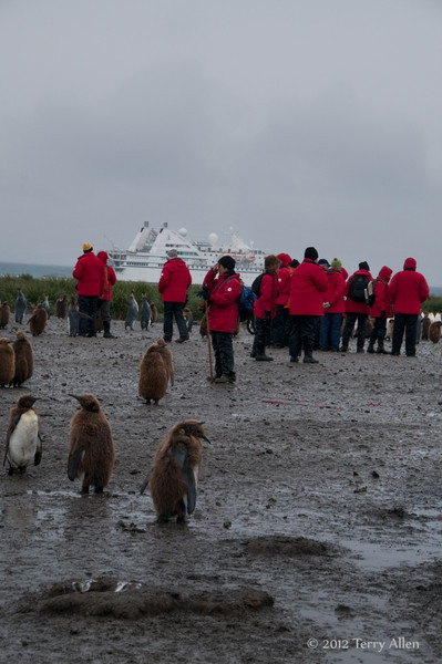 Photographers-&-penguins-2,-Salisbury-Plain,-South-Georgia-Island