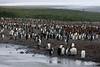 King-penguin-colony-3,-Salisbury-Plain,-South-Georgia-Island