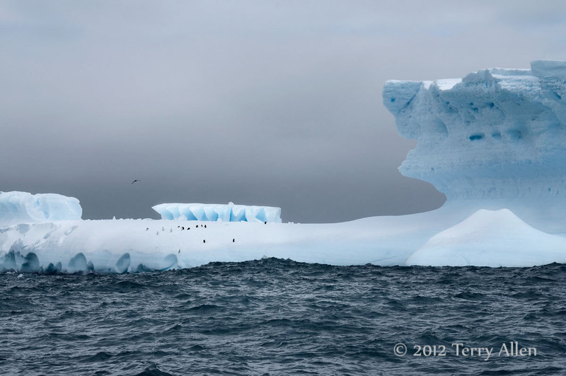 Iceberg-3,-Elephant-Island,-South-Shetland-Islands