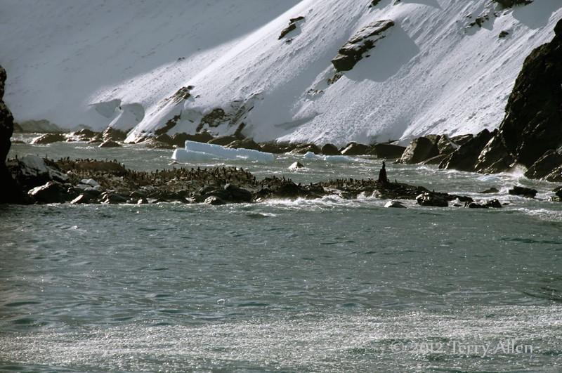 Point-Wild-2b,-Elephant-Island,-South-Shetland-Islands