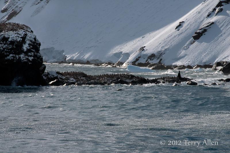Point-Wild-2a,-Elephant-Island,-South-Shetland-Islands
