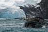 Point-Wild-3,-Elephant-Island,-South-Shetland-Islands