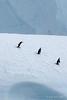 Chinstrap-penguins-on-iceberg,-Elephant-Island,-South-Shetland-Islands