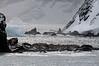 Scouting-Point-Wild,-Elephant-Island,-South-Shetland-Islands