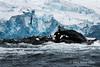 Point-Wild-monument-2,-Elephant-Island,-South-Shetland-Islands
