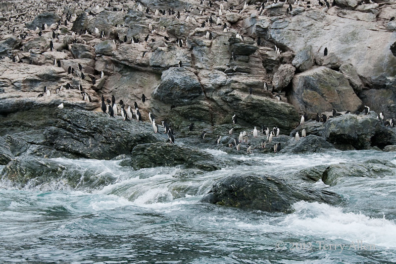 Chinstrap-penguin-colony-2,-Monroe-Island,-South-Orkney-Islands