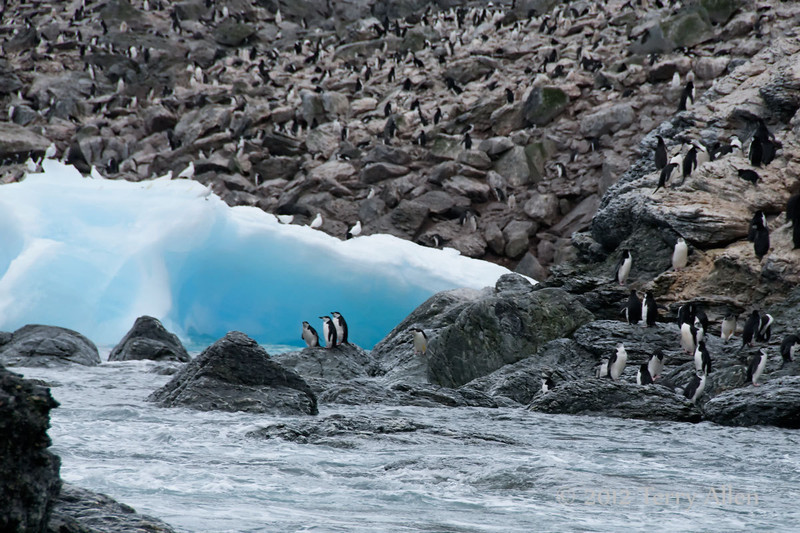 Chinstrap-penguins-and-blue-ice-1,-Monroe-Island,-South-Orkney-Islands