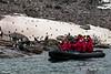Seals,-chinstrap-penguins,-sheathbills-&-zodiac,-Monroe-Island,-South-Orkney-Islands