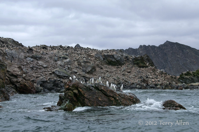 Chinstrap-penguin-colony-1,-Monroe-Island,-South-Orkney-Islands