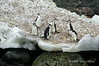 Chinstrap-penguins-2,-Monroe-Island,-South-Orkney-Islands