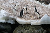 Chinstraps-penguins-with-dirty-snow-and-rocks-1,-Monroe-Island,-South-Orkney-Islands