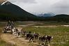 Sled-dogs,-Ushuaia