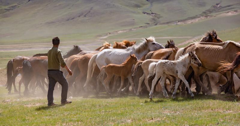 Wrangler tending his horses