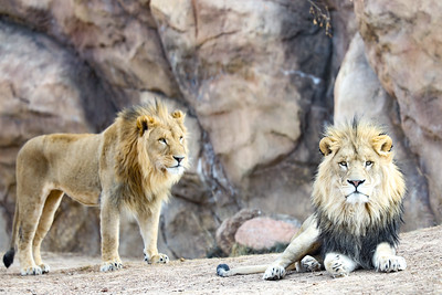 Denver Zoo (Practice with EOS R) with Mom