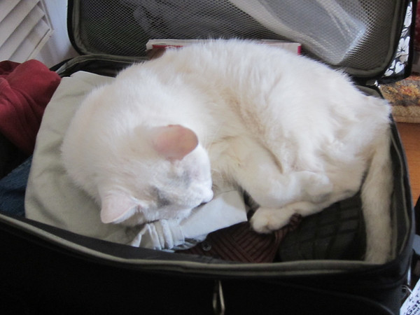 Cookie the Cat loved my suitcase