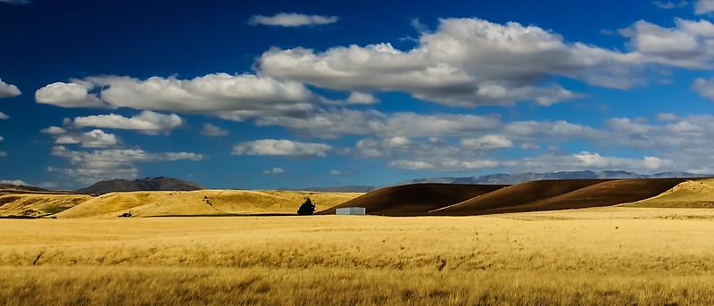 Otago gold