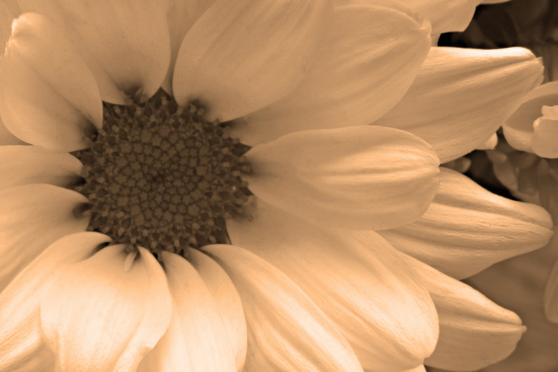 Mother's Day Mum Sepia