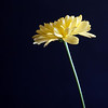 Long Stem Yellow Flower