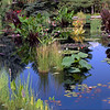 Lily Pond Jungle