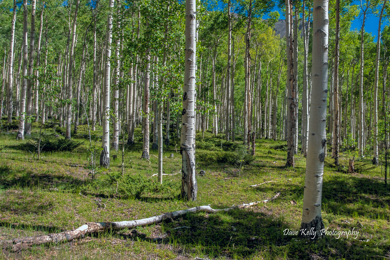 Aspens at Winfield