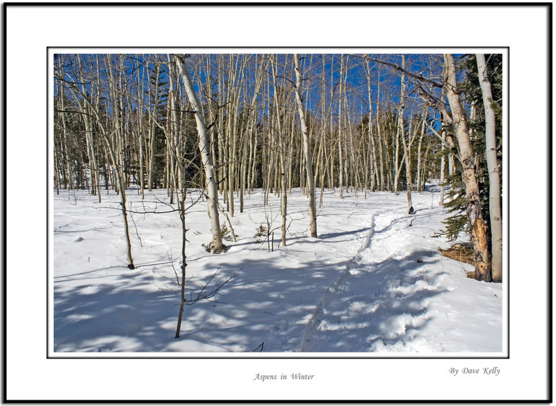 Aspens in Winter, Golden Gate Canyon