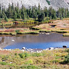 Beaver Ponds at Indian Peaks