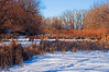 Winter On Cattail Marsh