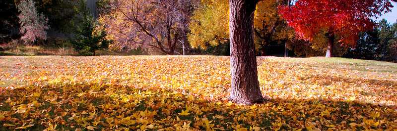 Greensview Fall in the Park
