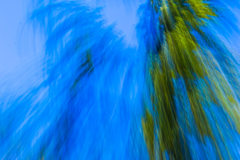 Zooming and appearing to splash toward the viewer, an abstract view of a tree and sky