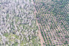 Aerial View Of Macadamia Farms On Hawaii, The Big Island, Hawaii, USA