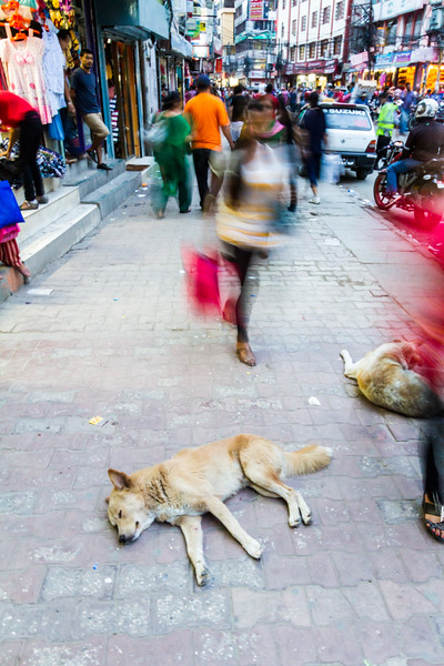 People shopping on street and dogs sleeping on pavement - Nepal