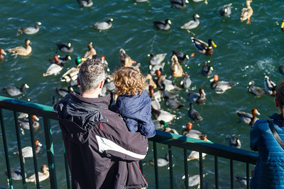 Father and daughter watching ducks swimming in lake - USA - California - Lake Arrowhead