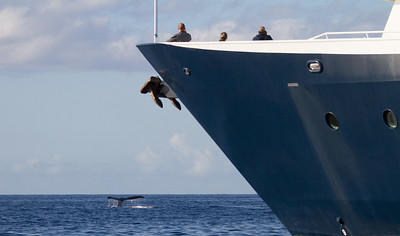 Tourist travelling in cruise liner and looking at whale - USA - Hawaii