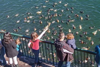People watching ducks swimming in lake - USA - California - Lake Arrowhead
