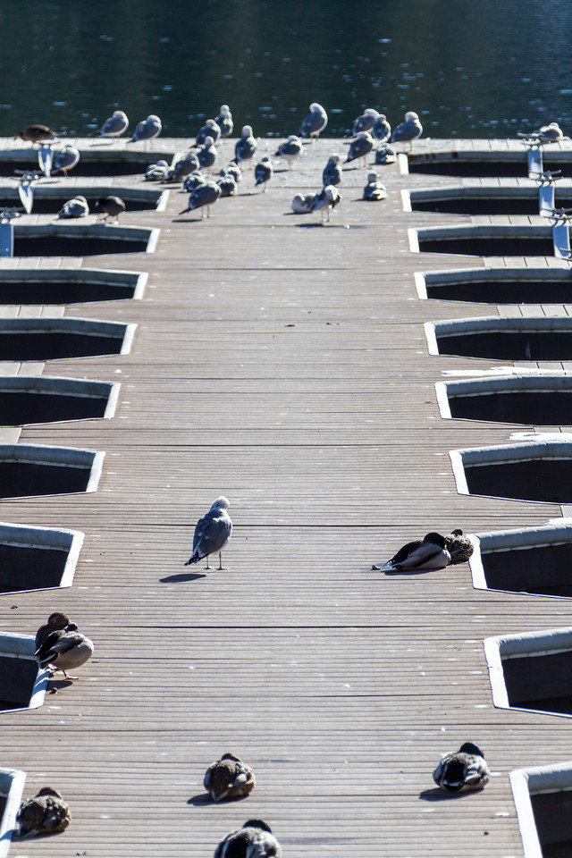 Birds on jetty - USA - California - Lake Arrowhead