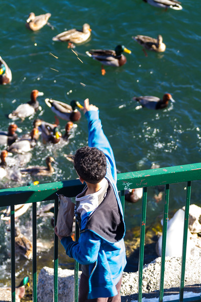 Boy feeding ducks swimming in lake - USA - California - Lake Arrowhead