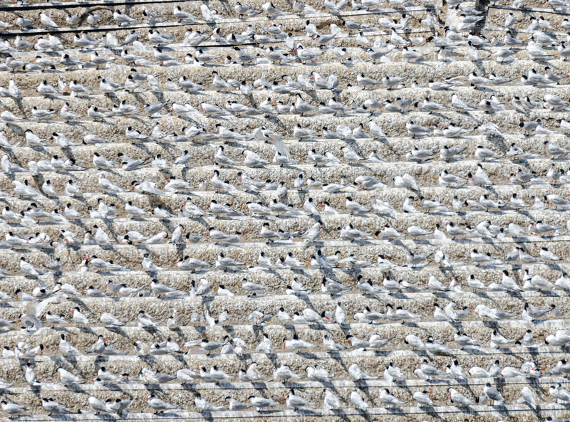 Flock of birds on roof - Peru