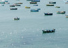 Fishing boats at sea and birds flying in foreground - Peru