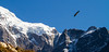 Bird flying near snowcapped mountains - Nepal