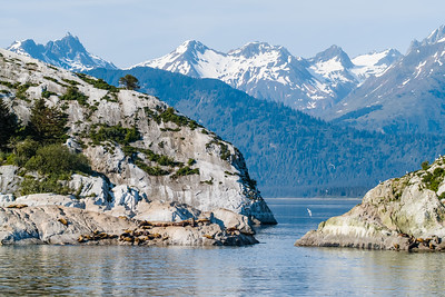 Steller Sea Lions (Eumetopias jubatus) rest on the rocks of South Marble Island in Glacier Bay National Park, Alaska