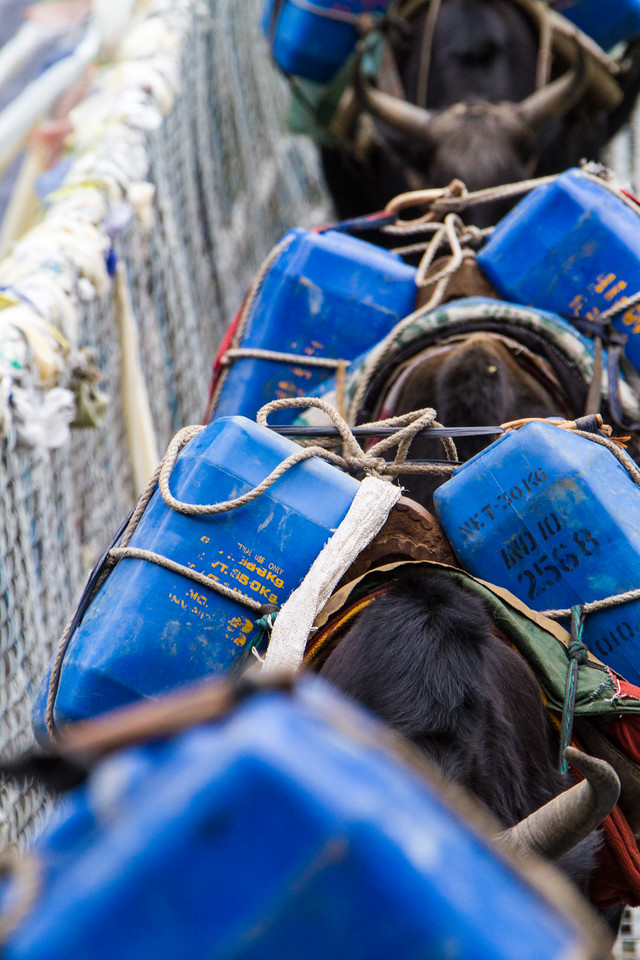 Pack animals (yaks) carry karosene fuel canisters across a suspension bridge in Nepal's Himalayas - Solukhumbu - Nepal