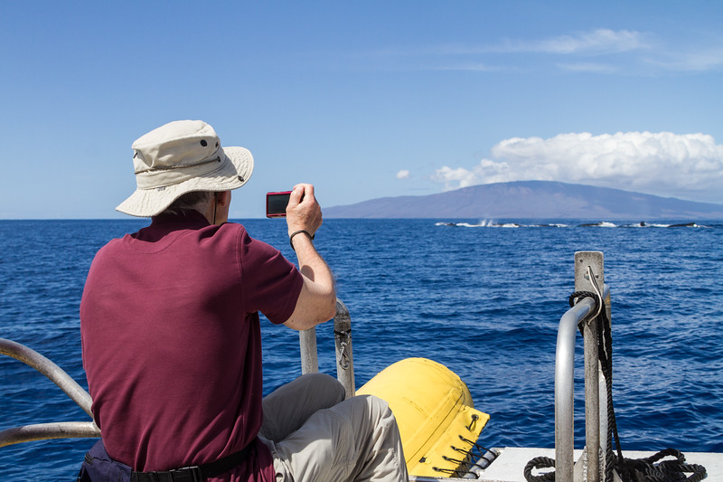 Man taking photographs of whales - USA - Hawaii